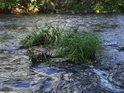 Naplavený trs trávy uprostřed Chrudimky asi stěží dokáže zesílit v malý ostrůvek.