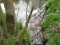 Oproti Králově pile posiluje Chrudimku zprava malý potůček, protékající mimo jiné také přes chráněné území Les na Dolíku.