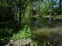 Romantický rybářský flek na levém břehu Chrudimky nad Nemošicemi.