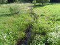 Chrudimka vytéká z lesů u Filipova a ubírá se loukou, stále je to jen malý potůček.