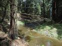 Chrudimka v lesním úseku pod Kameničkami pod rybníkem Groš.