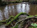 Romantické zátiší na pravém břehu Chrudimky s větvemi mechem porostlými.