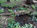 Přirozený můstek přes řeku Chrudimku.