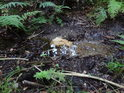 Chrudimka tu má kamenité dno, což v lese značí, že má již tak silný proud, že dokáže unést jehličí.