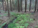Chrudimka padá lesem směrem k Filipovu.