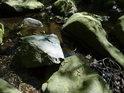 Odštípnutý kámen na pravém břehu Chrudimky pod přehradou Křižanovice působí mezi vodou omletými balvany poněkud vetřelecky.