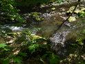 Pod přehradou Křižanovice v chráněném územím Krkanka má Chrudimka o poznání menší průtok.