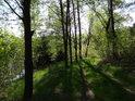 Prosluněná cesta v živých barvách na pravém břehu údolní nádrže Křižanovice.