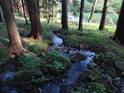 Pravobřežní přítok Chrudimky kousek nad vtokem do údolní nádrže Seč se prodírá lesem, aby předal své vody řece.